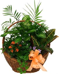 Basket of green and flowering plants