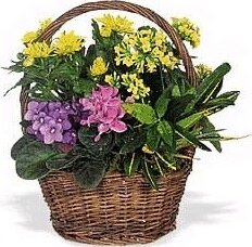 Basket of mixed flowering plants