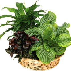 Basket of mixed green plants