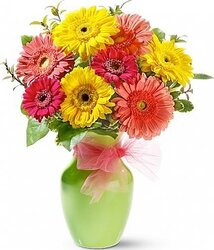 Multicolored Gerberas with seasonal greenery