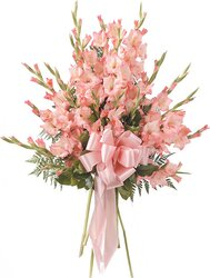Funeral bunch of pink gladioli
