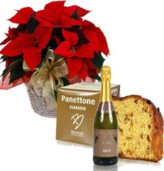 Red poinsettia with panettone and sparkling wine